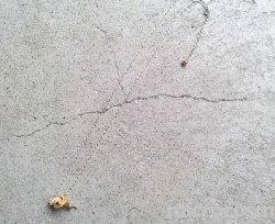 画像3: DECO 巣穴のモモンガペンダント(シルバー)